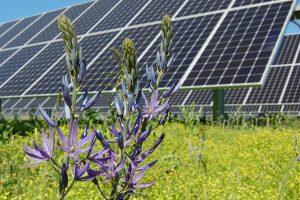 Renewable Profile Standard